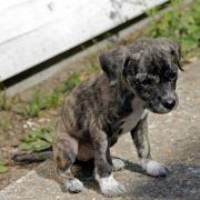 Frau wirft neugeborene Hundewelpen in Zug-Mülleimer (Foto)