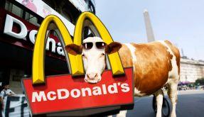 Eine Kuh kam zu McDonalds (Foto)