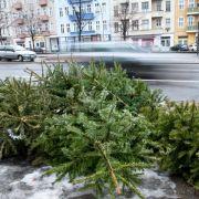 Weihnachten ist vorbei! Aber wohin mit dem Baum? (Foto)