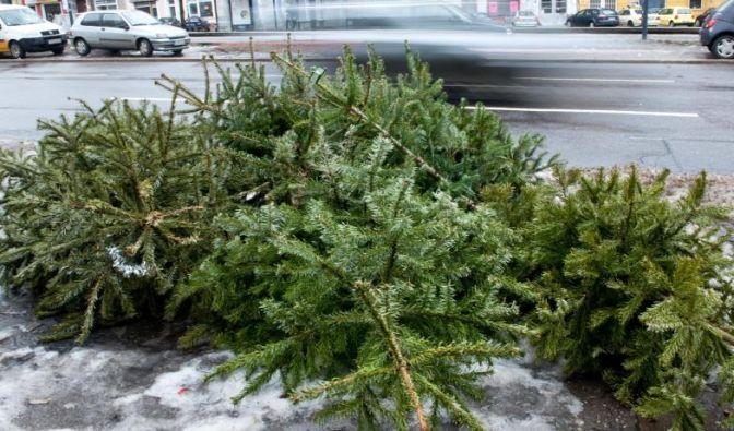 weihnachtsbaum entsorgen weihnachten ist vorbei aber. Black Bedroom Furniture Sets. Home Design Ideas