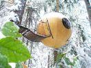 Eine kleine Wohnkapsel mitten im kanadischen Wald: Die Free Spirit Spheres versprechen eine Übernachtung der besonderen Art. (Foto)