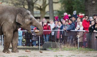 Einem englischen Zoo droht die Schließung, weil in den letzten Jahren teils gesunde Tiere eingeschläfert worden. (Foto)