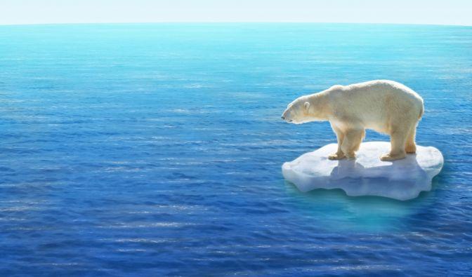 Eisbären jagen eigentlich Robben, doch müssen sie sich in Zukunft wohl auch neue Nahrungsquellen erschließen. (Foto)