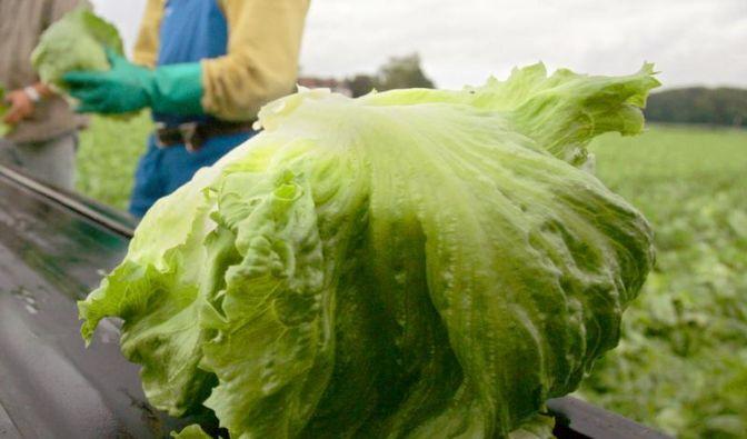 Eisbergsalat - Gesunde Power für den Winter (Foto)