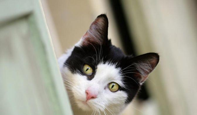 Eitriger Nasenausfluss bei Tieren ist Anzeichen für Erkältung (Foto)