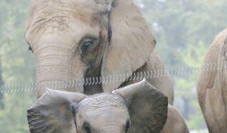 Elefant (Foto)