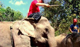 Elefantenführerschein (Foto)