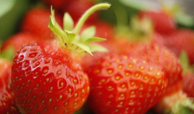 Erdbeeren (Foto)