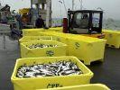 EU-Länder wollen den Fisch besser schützen (Foto)