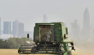 EU: Weniger Beihilfen für deutsche Bauern (Foto)