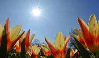 Experten sagen Frühjahrsbelebung auf Arbeitsmarkt voraus (Foto)