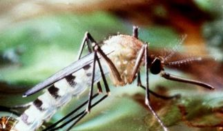Experten vereinfachen Malaria-Therapie (Foto)