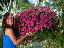 Farbe auf Augenhöhe: Blumenampeln täglich gießen (Foto)