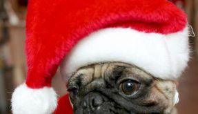 Feiertagstrubel: Stress für Tiere vermeiden (Foto)