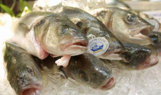 Fisch (Foto)