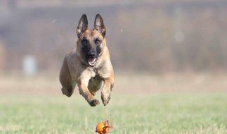 Fliegende Hunde (Foto)