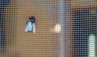 Fliegengitter sollen UV-beständig sein (Foto)