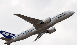 Flugzeuge in Gefahr: In Schottland ist ein Geier entflohen (Foto)