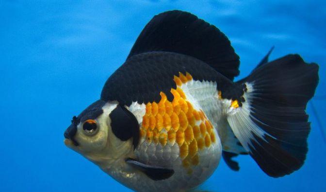 Forscher entdecken Kompass-Zellen bei Fischen (Foto)