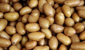 Forscher entziffern Kartoffel-Genom (Foto)