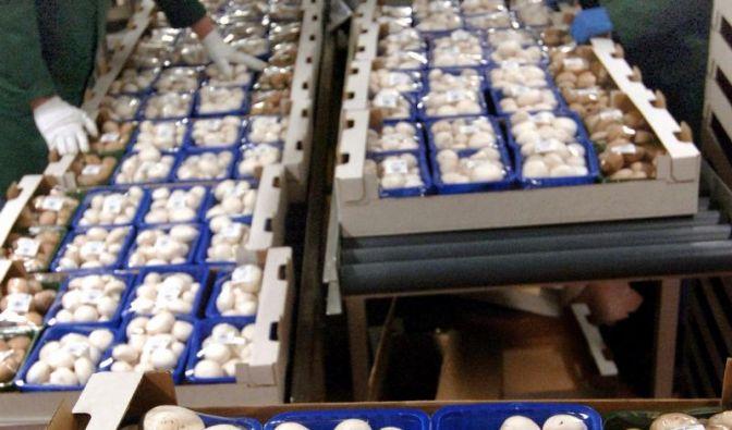 Frische Pilze haben saubere Hüte und keine Druckstellen (Foto)