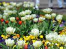 Frühling in den Gärten der Welt (Foto)