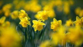 Frühling (Foto)