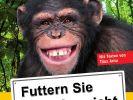 Futtern Sie die Affen nicht (Foto)