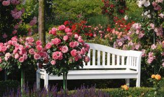 Garten (Foto)