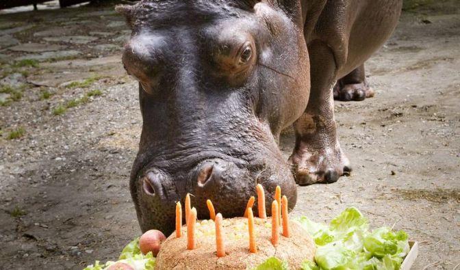 Geburtstag (Foto)