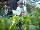 Gemüse selbst ernten (Foto)