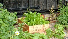 Gemüsegarten (Foto)