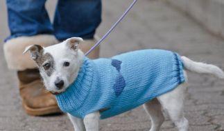 Gesunde Haustiere brauchen keinen Pulli (Foto)