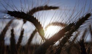 Getreide (Foto)