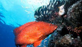 Great Barrier Reef (Foto)