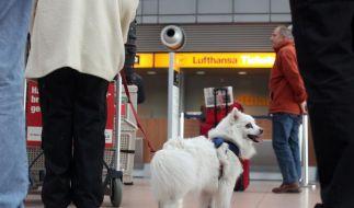 Großbritannien lockert Einreiseregeln für Tiere (Foto)