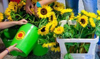 Grüne streiten um Atomkurs - CDU frohlockt (Foto)