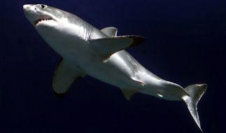 Hai-Attacken auf Menschen haben im letzten Jahr 2015 ein erschreckendes Ausmaß erreicht. (Foto)