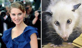 Heidi hat ihre Premiere als Oscar-Orakel gemeistert - und Natalie Portman als Gewinnerin gewählt. (Foto)