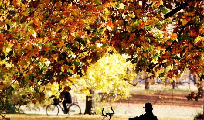 Herbst (Foto)