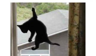 Hier läuft die Spider-Cat eine Fensterscheibe hinauf. (Foto)