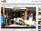 Hier trotten die Schafe brav wieder aus dem Laden raus. (Foto)