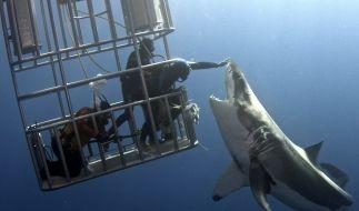 High-Five mal anders: Diese Aktion sollten Sie definitiv nicht nachmachen. (Foto)