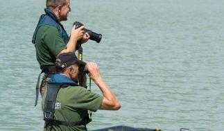 Hinweise auf Krokodil in bayerischem See verdichten sich (Foto)