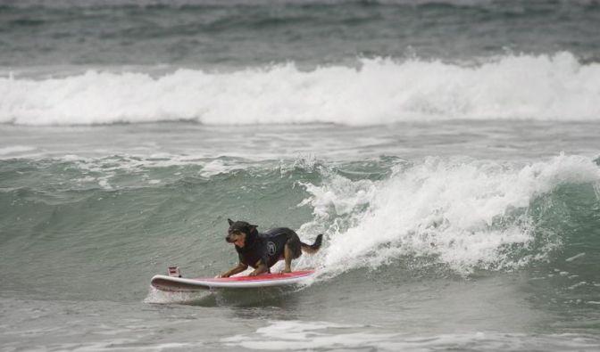 Hund an Board (Foto)
