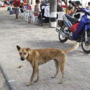 Hunde sind auf Bali nicht nur als Streuner anzutreffen, sondern auch als Delikatesse als Grillspieße - sehr zum Missfallen von Tierschutzorganisationen. (Foto)