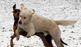 Hunde erkälten sich nur ganz selten (Foto)
