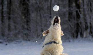 Hunde fressen besser keinen Schnee (Foto)