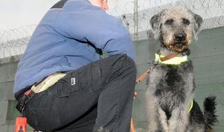 Hunde im Strafvollzug (Foto)