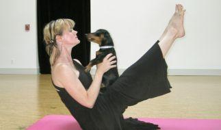 Hunde-Yoga (Foto)